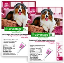 12 MONTH Advantage Flea Control Red: For Dogs 21-55lbs.