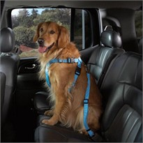 Cruising Companion Car Harness Blue - X Large