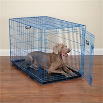 Crate Appeal Color Crate Large - Blue Splash