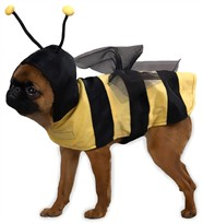 Casual Canine Honey Bee Costume - MEDIUM