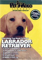 Labrador Retriever - DVD