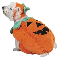 Zack & Zoey Pumpkin Pooch Costume - SMALL