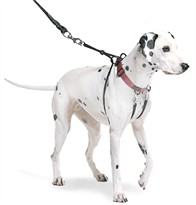 The Sporn Pull Stop Halter Leash RED - XLARGE