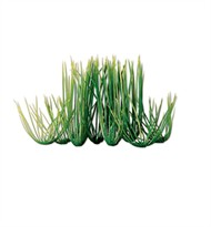 Tetra Water Wonders Aquarium Plant Hairgrass 9""