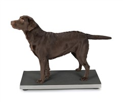 Total Pet Health Stainless Steel Vet Scale Large
