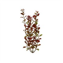 Tetra Water Wonders Aquarium Plant Red Ludwigia 9""