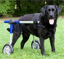 Walkin' Wheels for Handicapped Pets - Large
